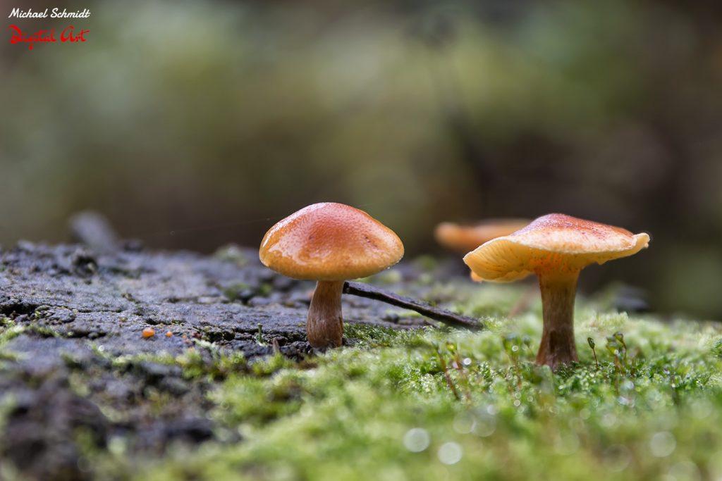 mushroom-family