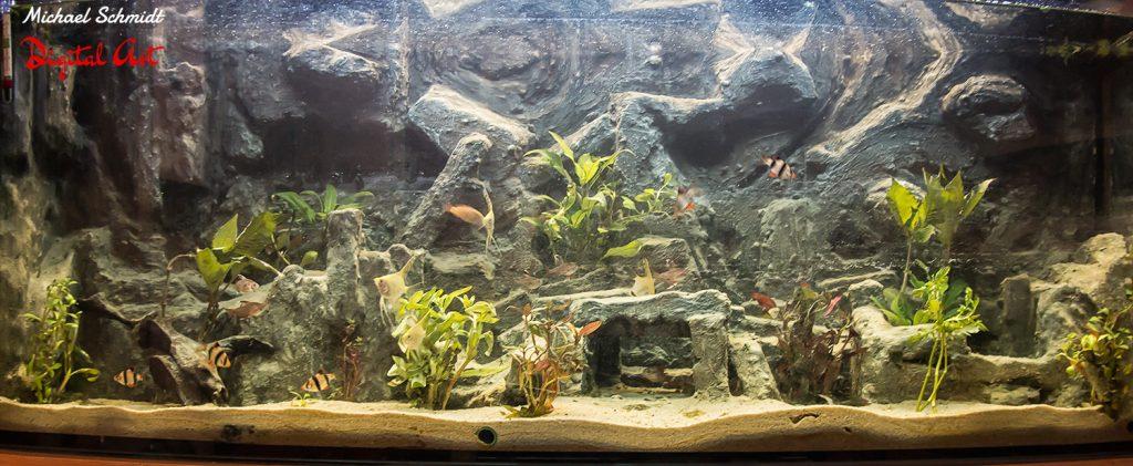 aquarium01