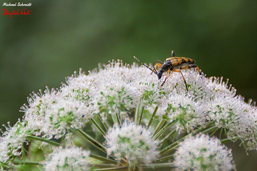 tiny-beetle