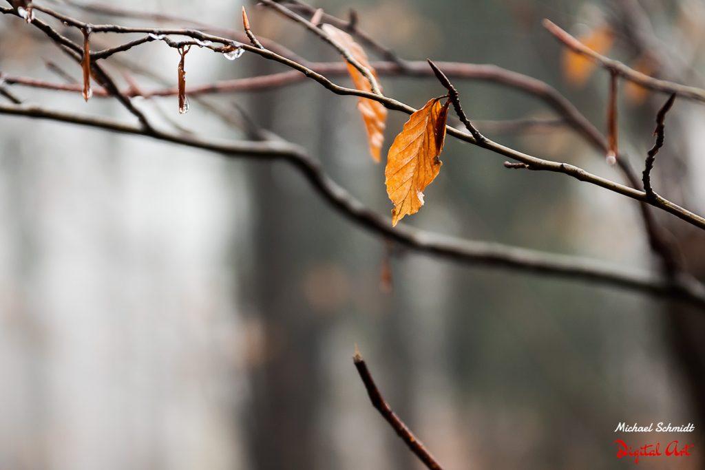 last-leafs