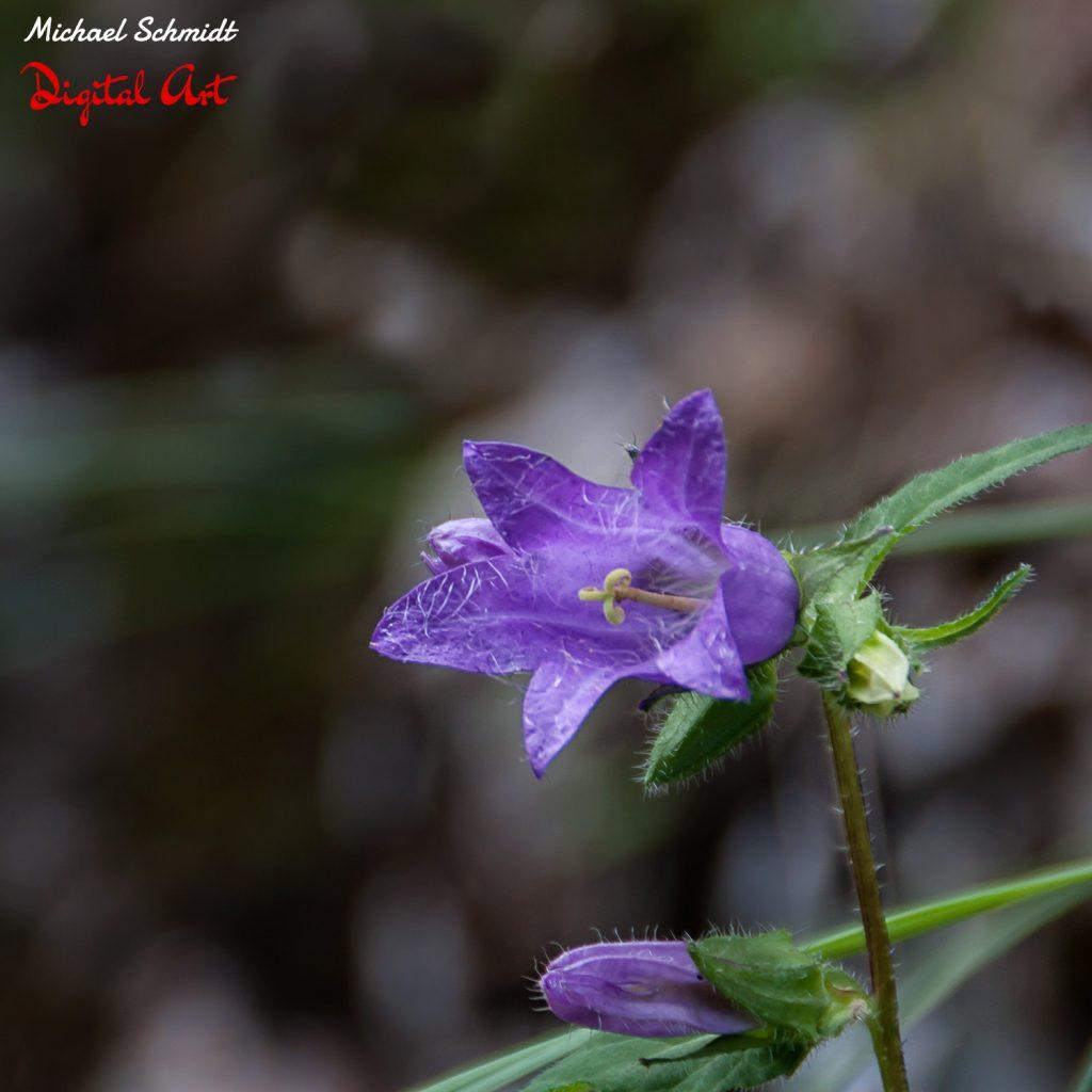 little-purple-flower